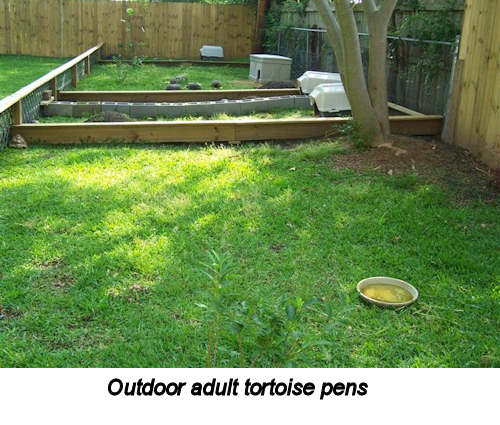 Outdoor adult tortoise pens