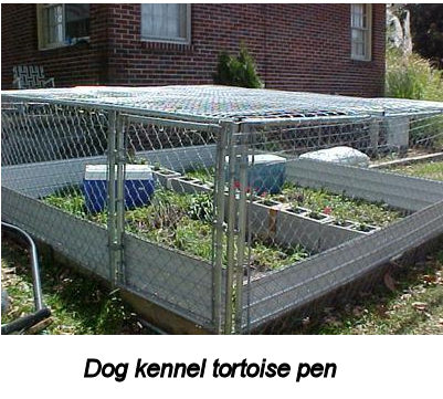 Dog kennel tortoise pen