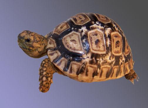 TortoiseYard com